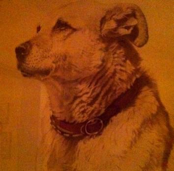 Orsodog